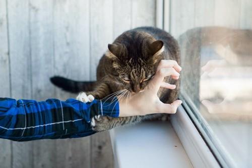 人の手を掴んで噛みつく窓辺の猫