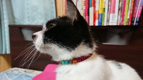 完成品をつけた愛猫のアップ画像
