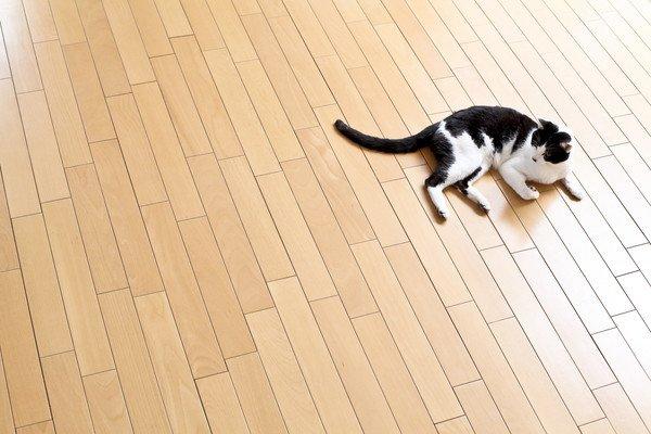フローリングと黒白猫
