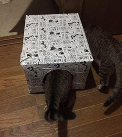 猫の体が半分入っているハウス