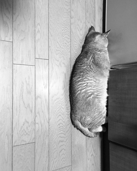 部屋の隅で背中を向けて寝る猫