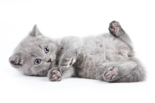すます赤ちゃん猫