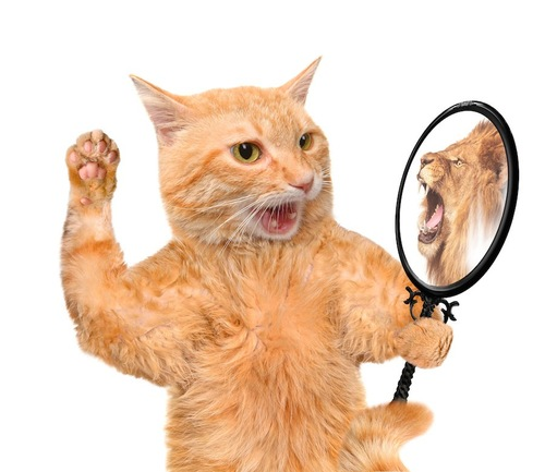 鏡に映るライオンを見て驚く猫