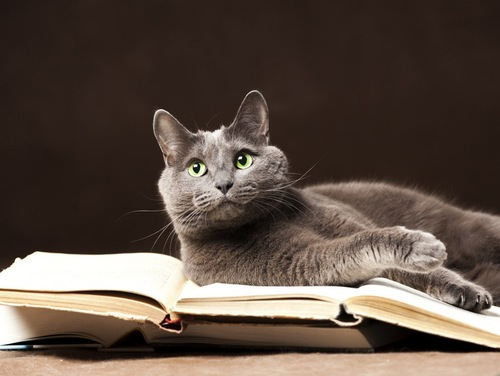 本に乗る猫