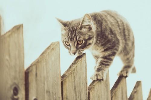細い場所を歩く猫