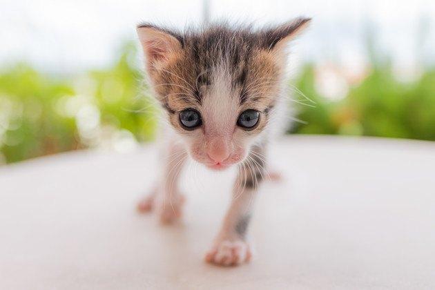 生後1週間の子猫