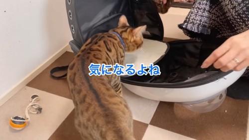 キャリーバッグに入ろうとする猫