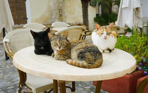 丸テーブルに乗っている猫たち