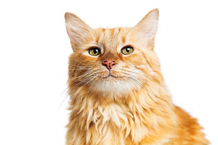 嬉しい猫2