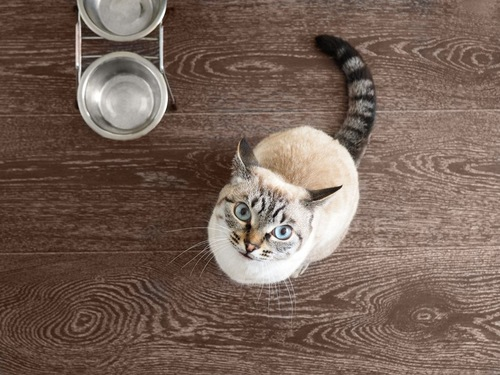 おねだり中の猫