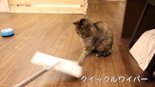 クイックルワイパーにパンチする猫