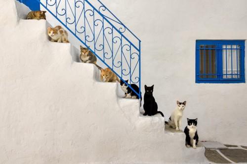たくさんの猫