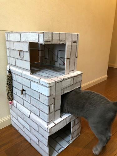 猫が一階に入る