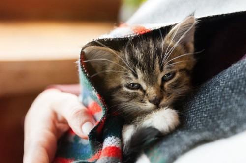 人物の懐に抱かれる子猫