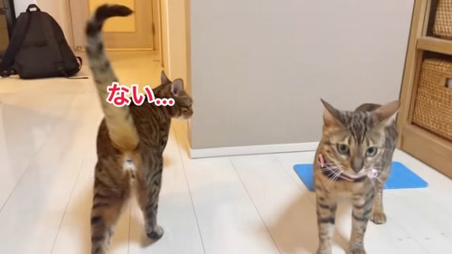 横を見る猫の後ろ姿