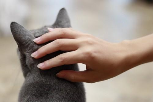 猫の後頭部を撫でる手