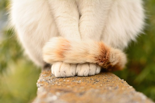 尻尾を巻きつけて座る猫の足元