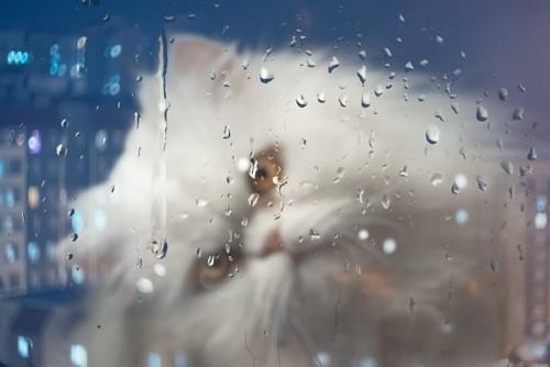 雨の日の窓と猫