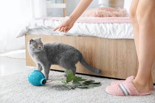 花瓶を倒して飼い主に叱られている猫