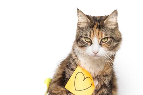 ハートの描かれた付箋を貼られた猫