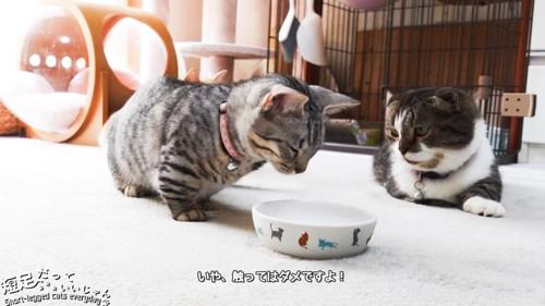 お皿に顔を近づける猫