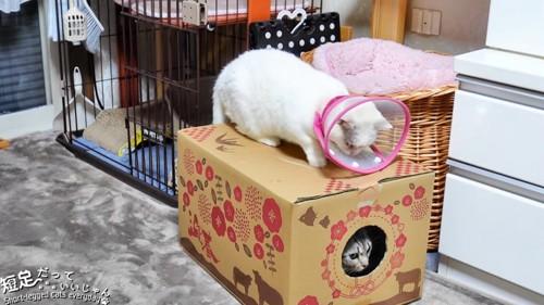 箱の中の猫とはこの上にいる猫