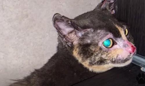 顔に火傷を負った猫
