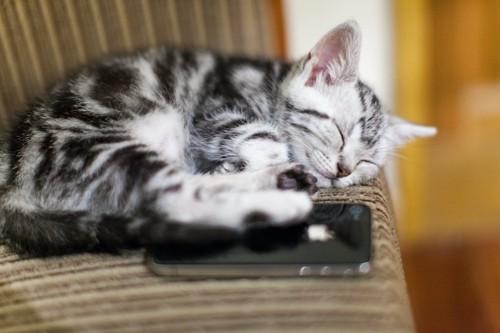 スマホの上で眠っている子猫