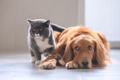 猫と犬の微妙な関係