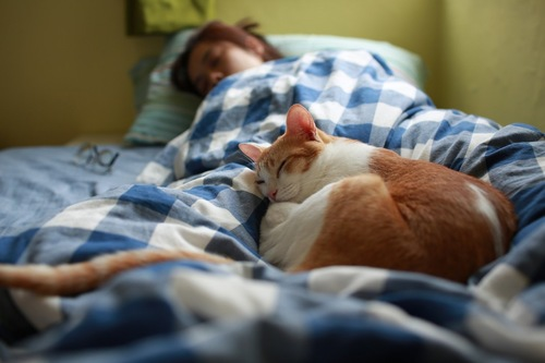 布団の真ん中で眠る猫