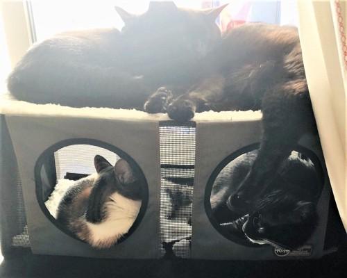 ねこよんコギわん第30話窓ベッドに集合する猫たち