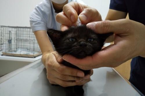 首に薬を垂らされる黒猫