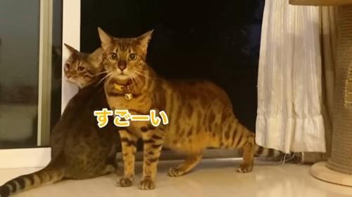 黄色い首輪の猫