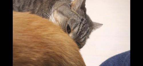 お尻の匂いが気になる猫