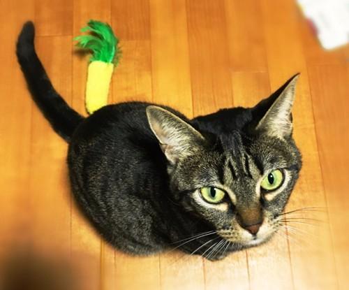42話パイナップル猫じゃらしとつくねちゃん