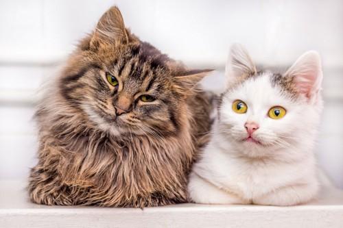 長毛の猫と短毛の猫