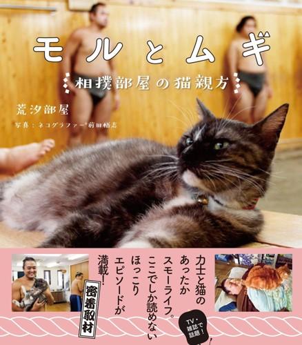 相撲部屋の猫親方