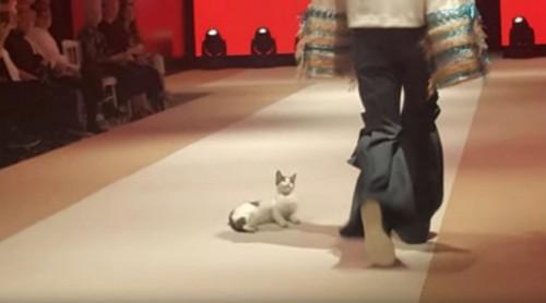 モデルを見上げる猫