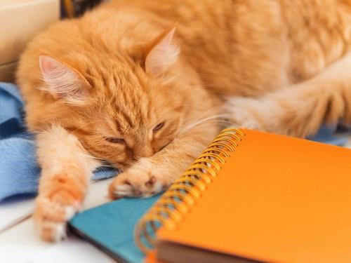 ノートなどが置かれたテーブルで眠る猫