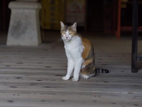 境内にたたずむ猫