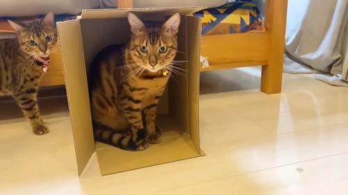 縦に置かれた箱に入る猫