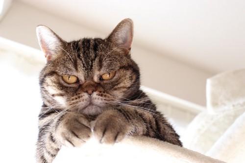 じ〜っと見てくる猫
