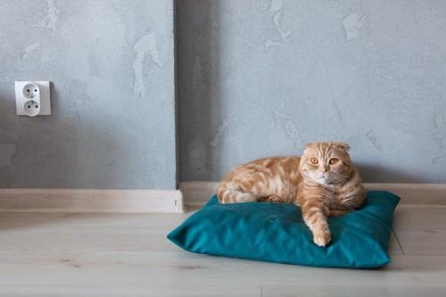 枕の上でくつろぐ猫