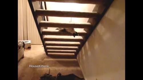 階段の隙間から顔を出す猫
