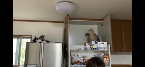 棚の上に侵入する猫