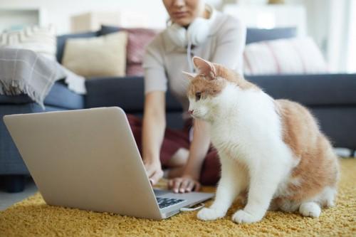 ノートパソコンを見つめる猫
