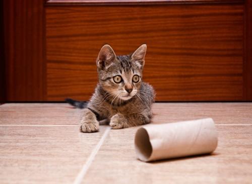 トイレットペーパーの芯と猫