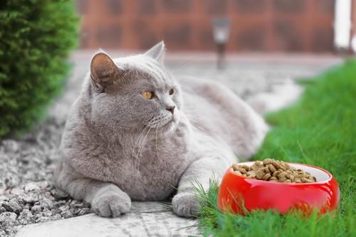 屋外でごはんを与えられている太った猫
