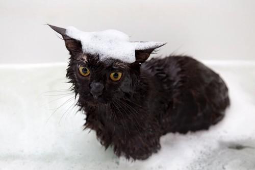 頭に泡を乗せている黒猫
