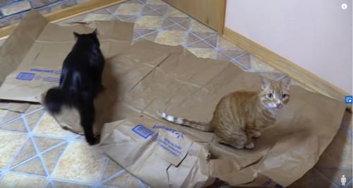 紙袋に座る猫